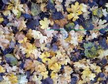Summer Leaves……