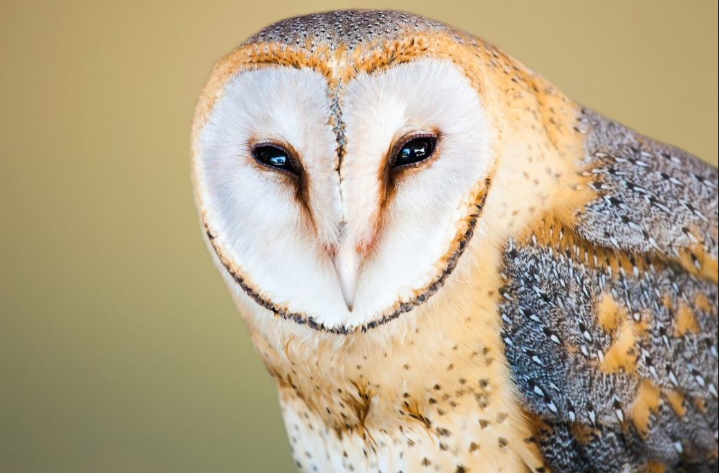 The Owl's Gaze – Reflections from Richard